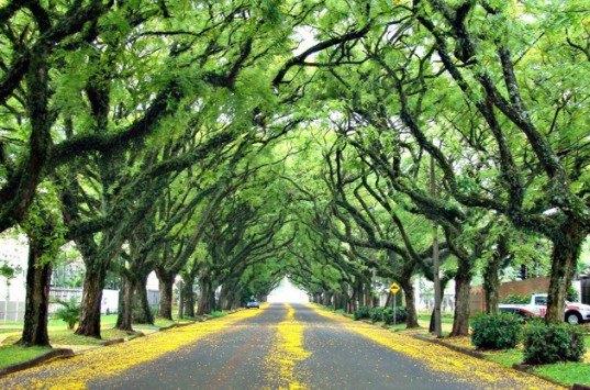 وجود درخت در خیابان ها ریسک افسردگی و مصرف داروهای ضد افسرگی را کاهش می دهد