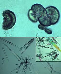 Drug Crystals: